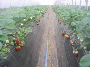 イイジマ農園