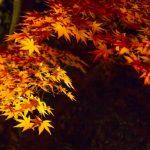 滋賀県の紅葉!美しいライトアップおすすめスポット【7選】