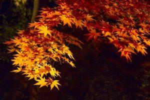 滋賀県 紅葉 ライトアップ