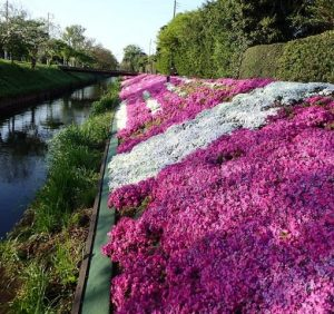 渋田川の河畔