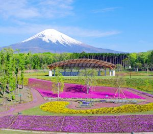 富士樹空の森