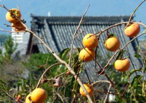 奈良県 ご当地調味料